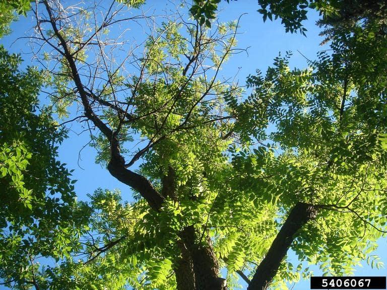 TCD Tree