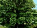 kalpic31 uconn plant database 120x90